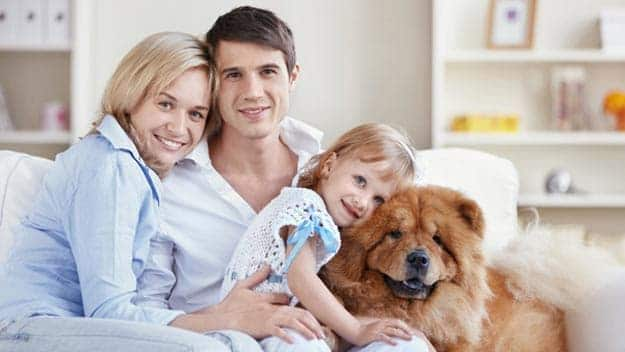 Wills & Trusts dog-young-family Direct Wills Hereford
